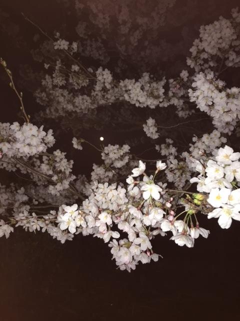 桜だより③ 〜満月と満開の桜と〜_c0334574_19293680.jpg