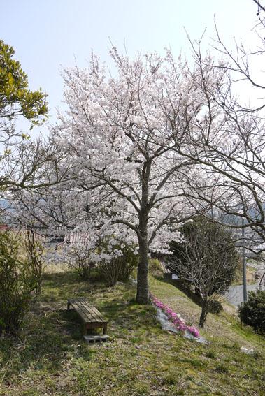 桜だより③ 〜満月と満開の桜と〜_c0334574_19371379.jpg