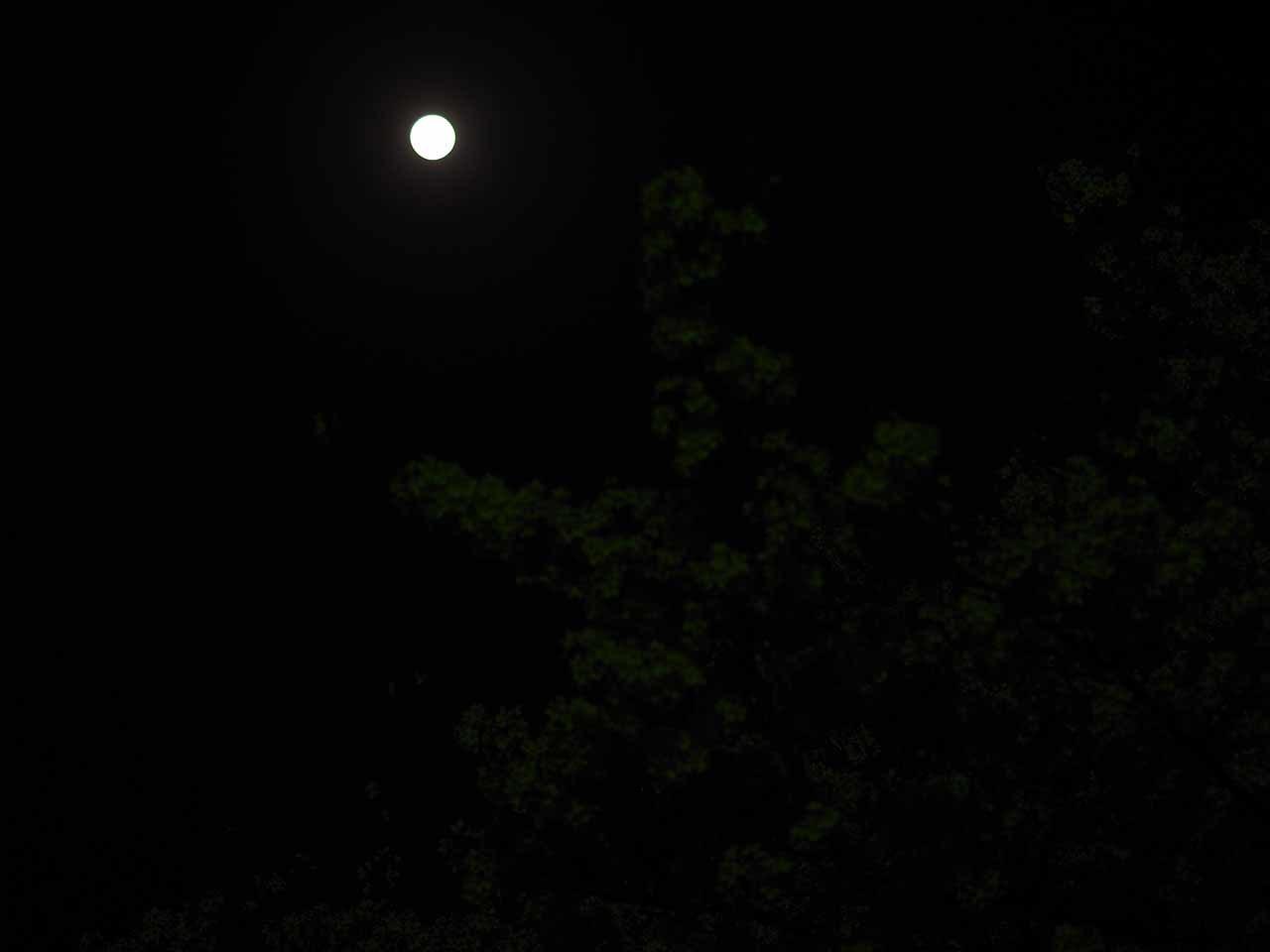 夜桜とブルームーン・・・なんだけど_b0021375_21324487.jpg