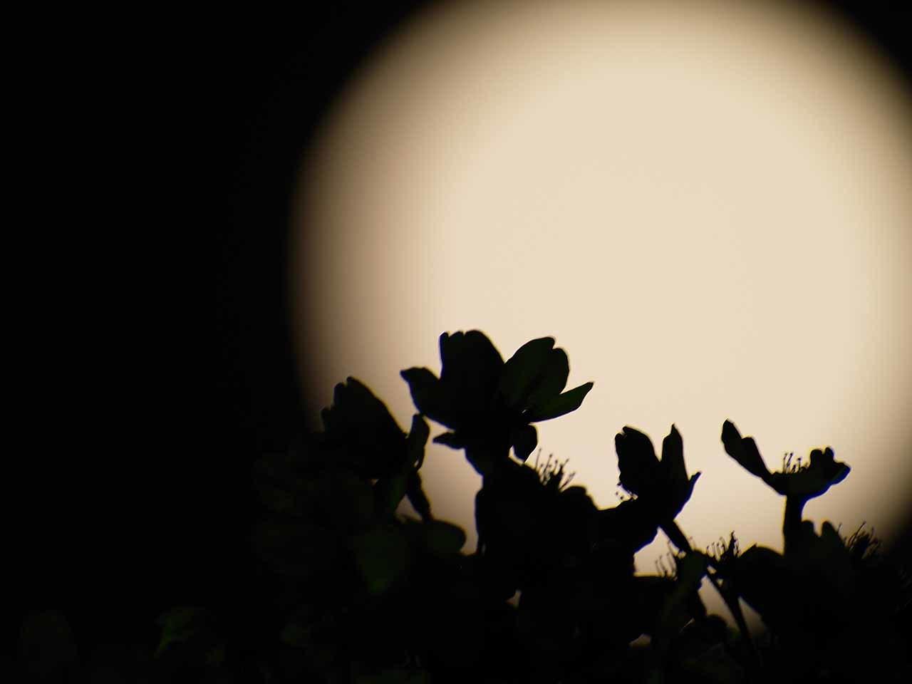 夜桜とブルームーン・・・なんだけど_b0021375_21334680.jpg