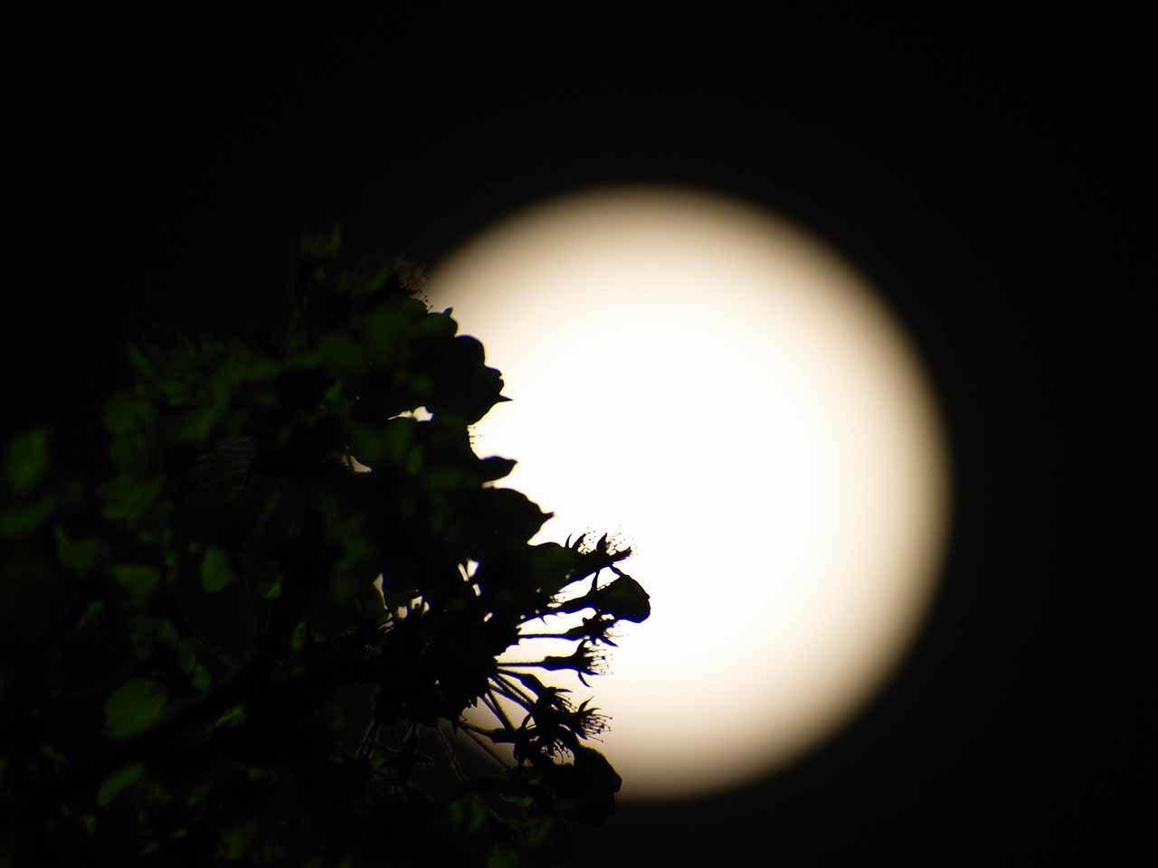夜桜とブルームーン・・・なんだけど_b0021375_21335487.jpg