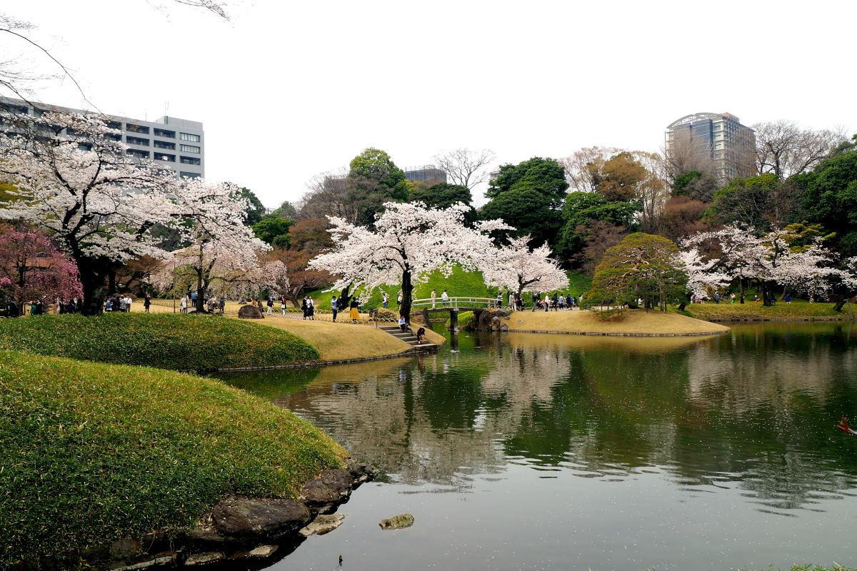桜2018①六義園・後楽園_c0252688_14270693.jpg