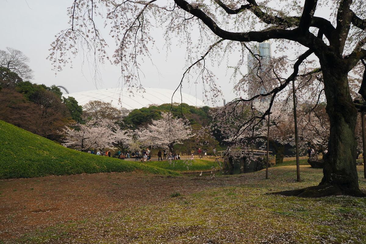 桜2018①六義園・後楽園_c0252688_14273855.jpg