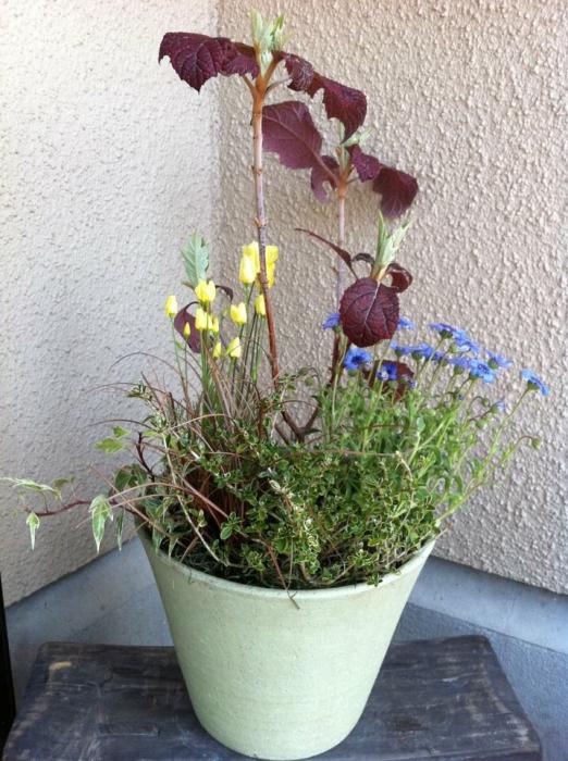 「寄せ植えギャラリー: 河内長野市」_a0233896_18244352.jpg