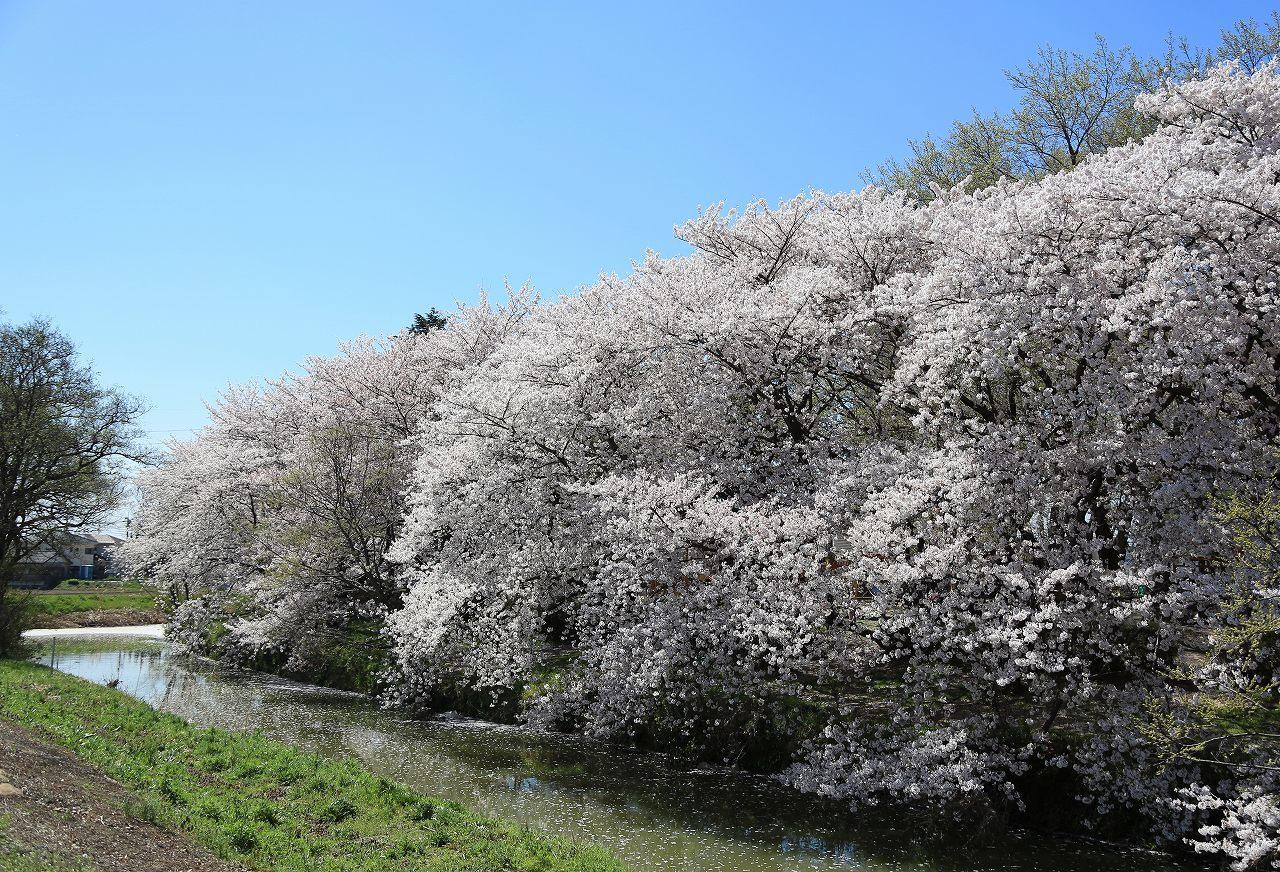 秋ヶ瀬公園散歩_f0296999_22485258.jpg