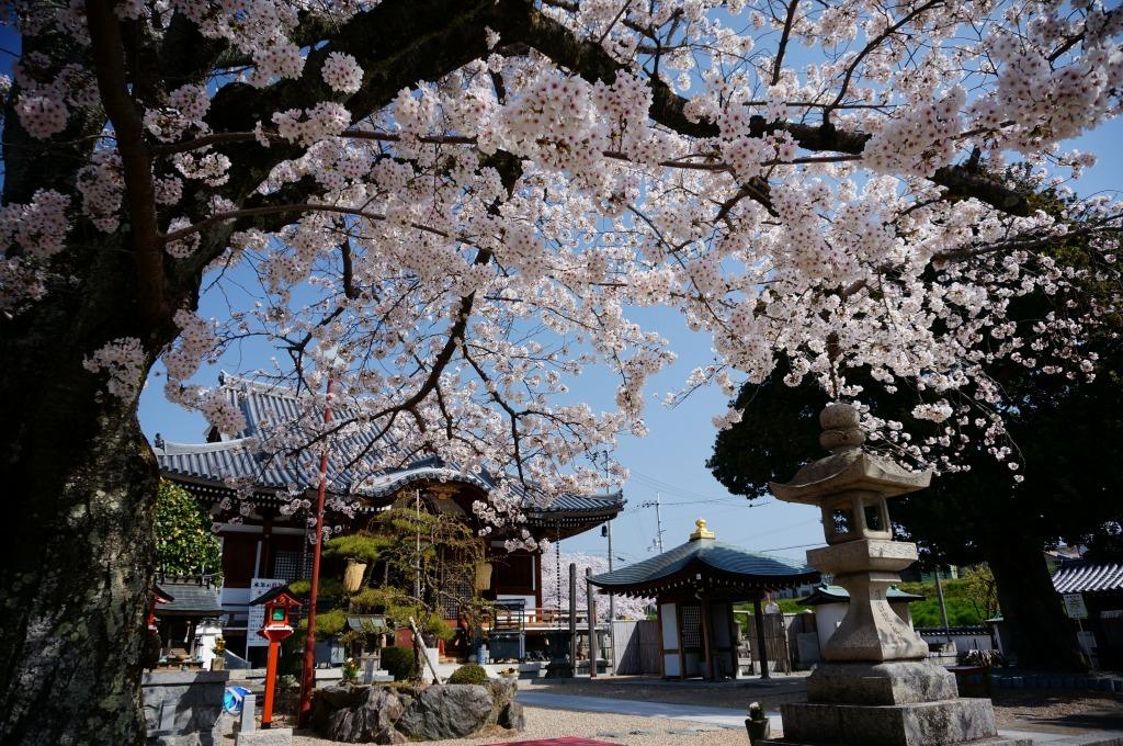 【大阪】帝釈寺_c0348200_22255205.jpg