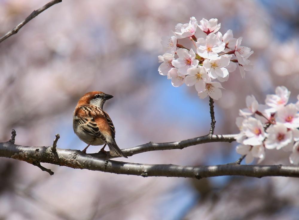 春爛漫、、_f0305401_18454477.jpg