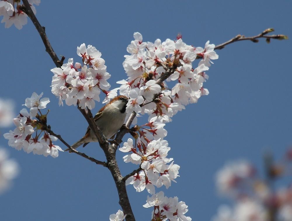 春爛漫、、_f0305401_18455089.jpg