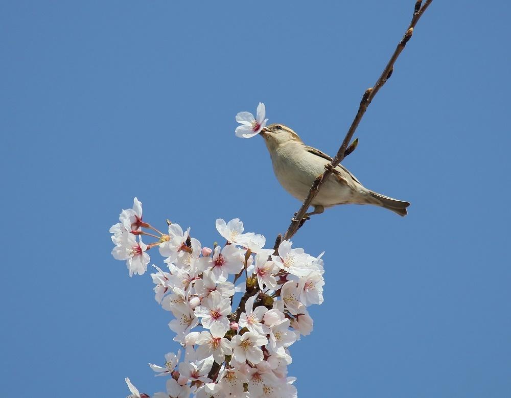 春爛漫、、_f0305401_18455863.jpg