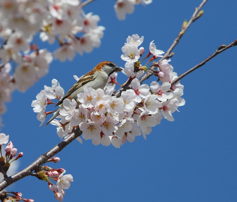 春爛漫、、_f0305401_18460433.jpg