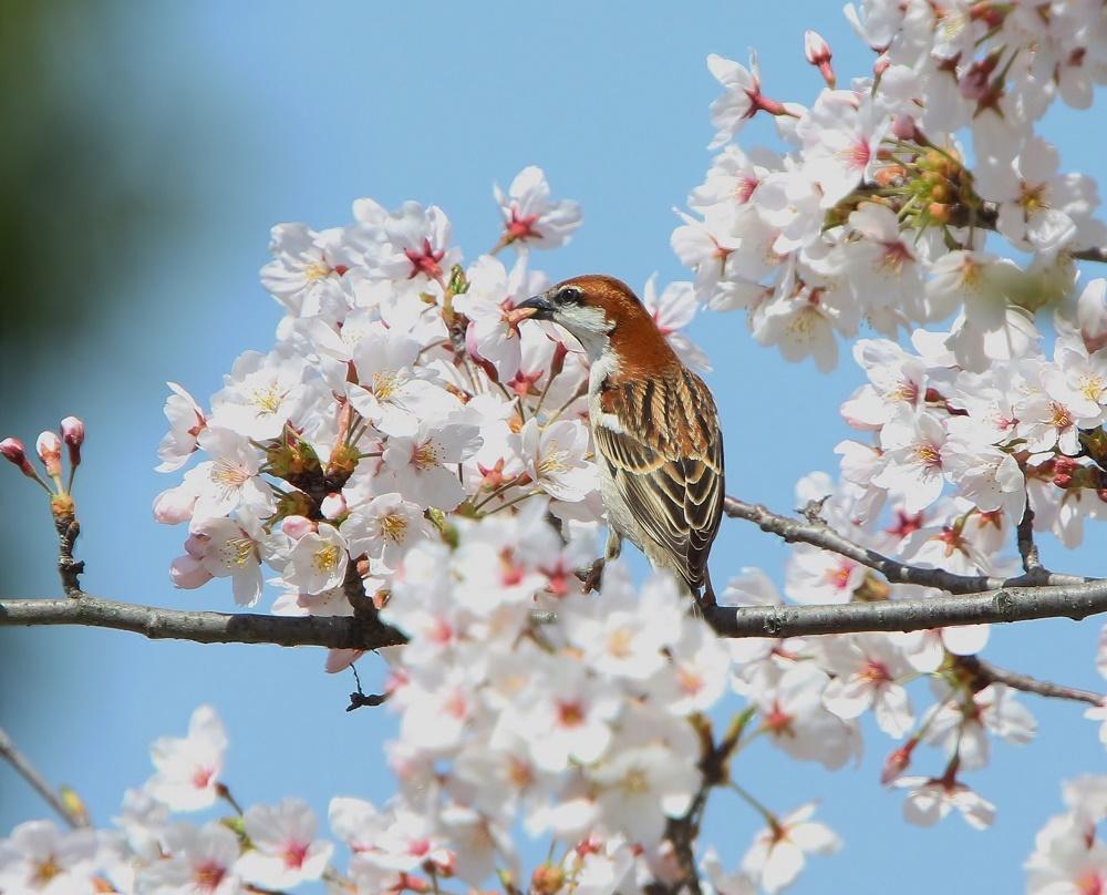 春爛漫、、_f0305401_18461425.jpg