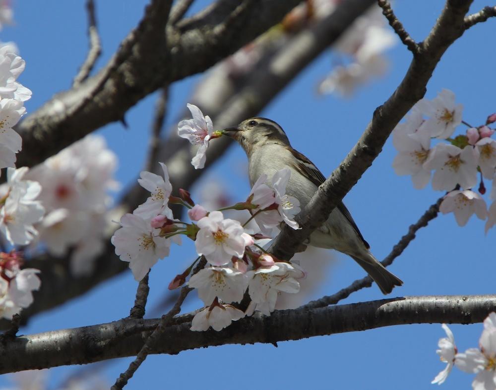 春爛漫、、_f0305401_18504577.jpg