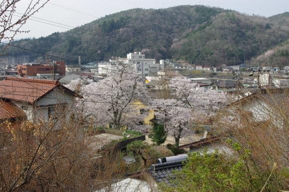 No 139  春真っ盛り福渡(4月1日)_d0341514_21241771.jpg