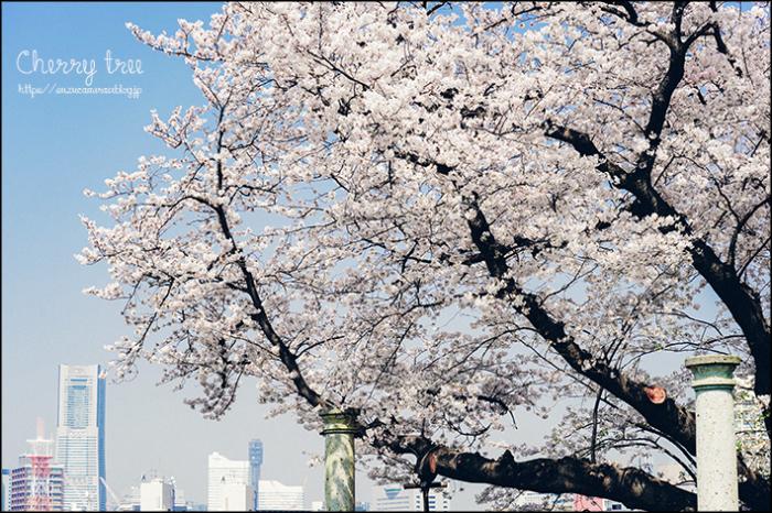 丘の上の桜_f0100215_20520649.jpg