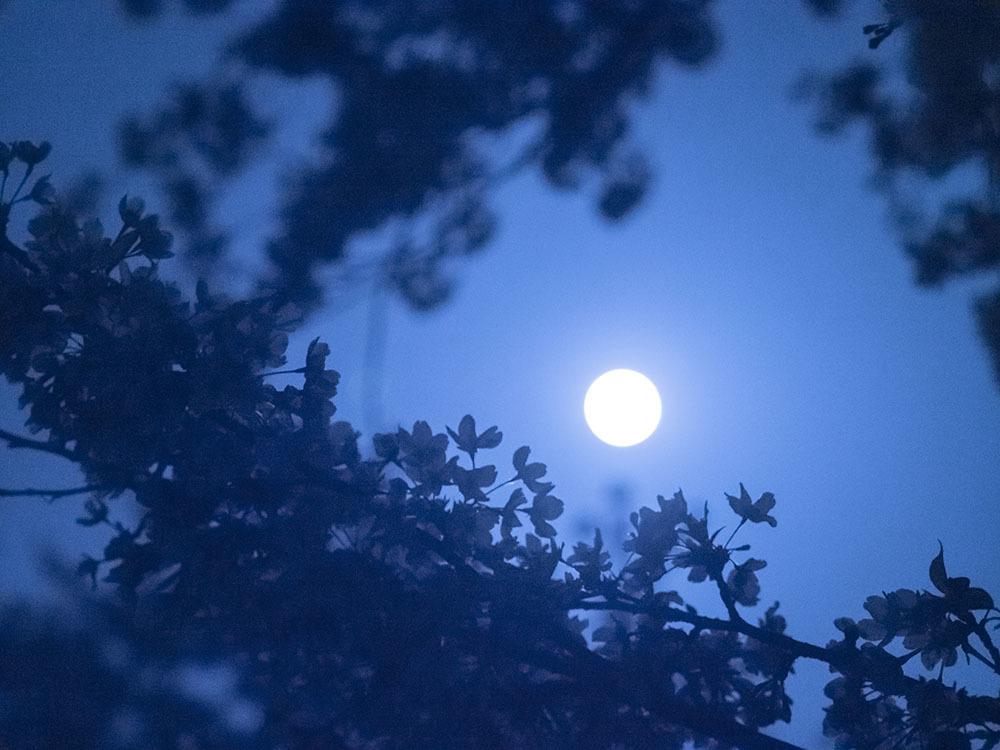 朧月夜_f0324026_19134727.jpg