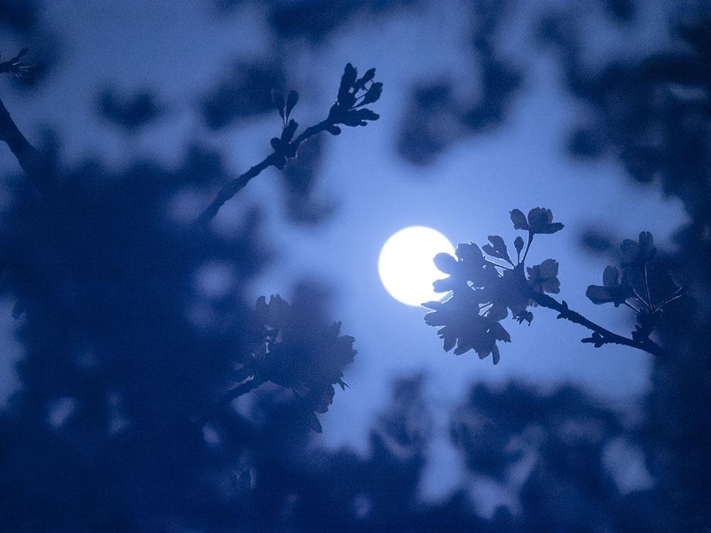 朧月夜_f0324026_19134774.jpg