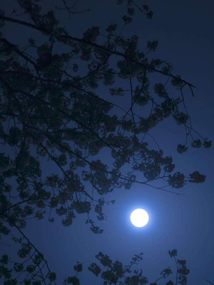 朧月夜_f0324026_19134788.jpg