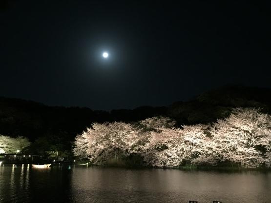 夜桜♪と4月からの営業時間♪_c0367631_17061998.jpeg
