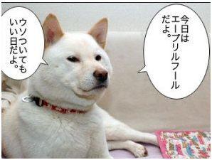 エイプリルフール..カープ三連勝_b0137932_18235836.jpg