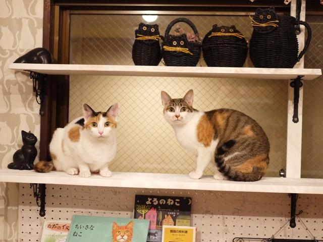 猫のお預かり ぽんずちゃんりんごちゃん編。_a0143140_22280915.jpg