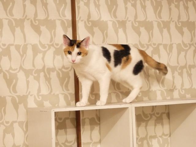 猫のお預かり ぽんずちゃんりんごちゃん編。_a0143140_22283280.jpg