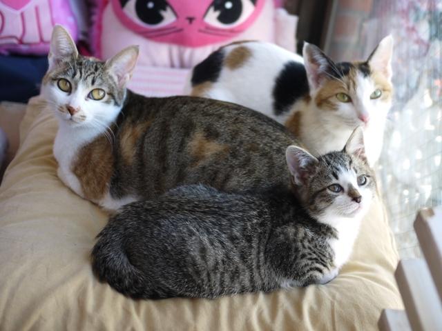 猫のお預かり ぽんずちゃんりんごちゃんおろしくん編。_a0143140_22324434.jpg