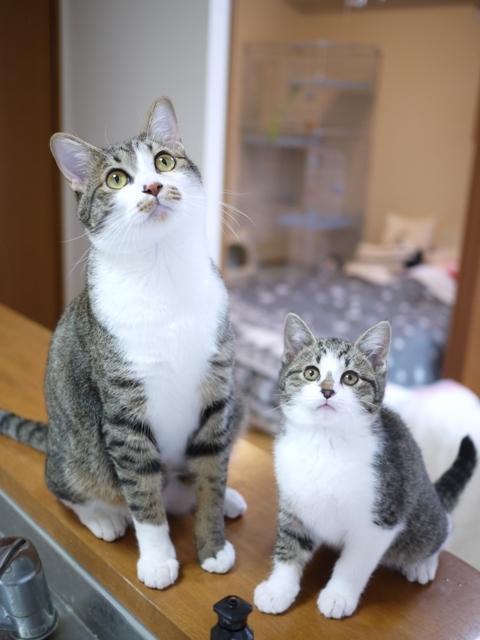 猫のお留守番 しかまるくんおろしくん編。_a0143140_22400668.jpg