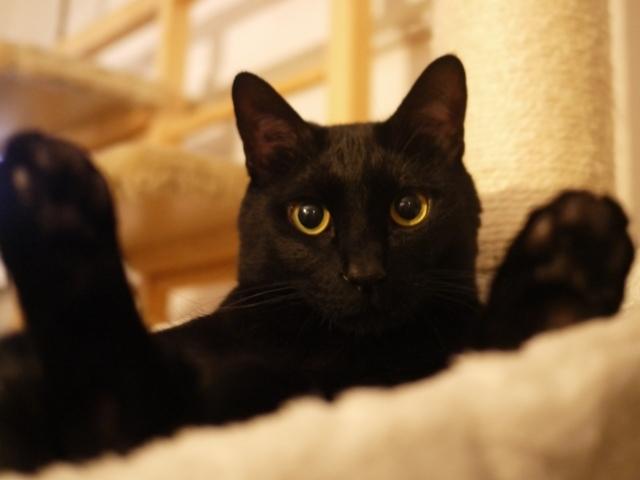 お誕生日猫 ぎゃぉす5歳編。_a0143140_23170018.jpg