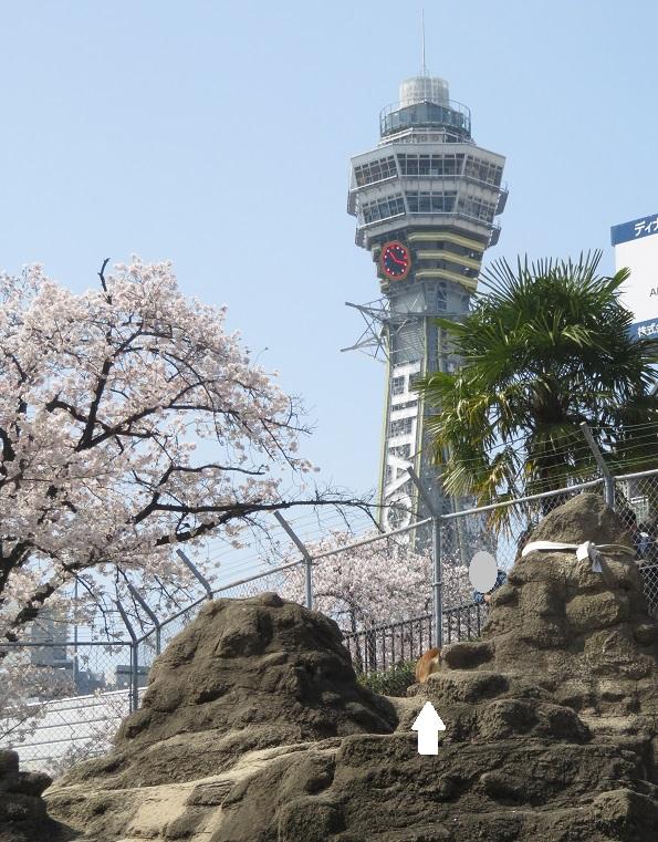 天王寺動物園(3.29 木)続き_f0002743_210461.jpg