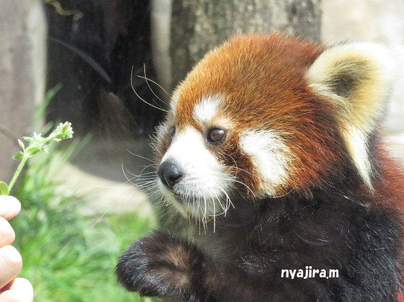 天王寺動物園(3.29 木)続き_f0002743_294547.jpg