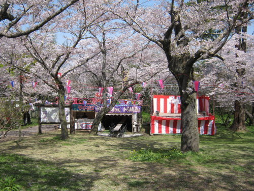 4月1日の桜開花状況_c0363752_11105511.jpg