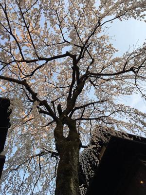 子どもの人生の節目~感謝!感謝!in京都_d0082356_11152110.jpg