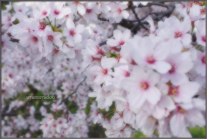 松ヶ崎の ~朝~_a0157263_21355880.jpg
