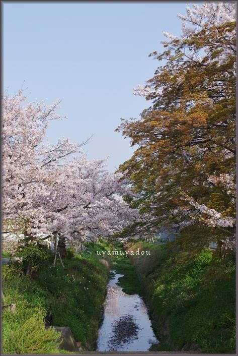 松ヶ崎の ~朝~_a0157263_21363141.jpg