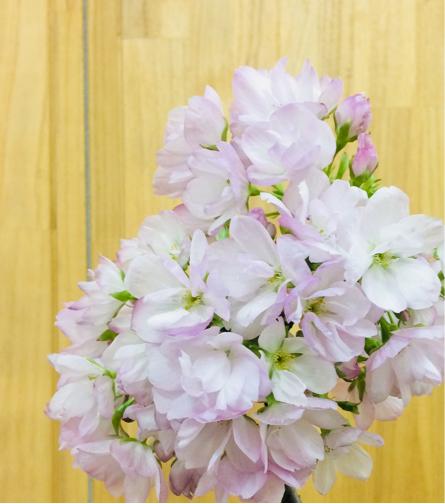桜日和_b0273973_18131259.jpg