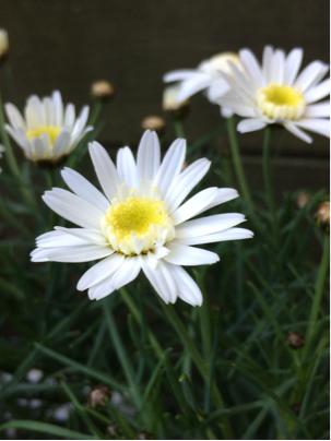 春ですね〜♪_d0058876_15540792.jpg