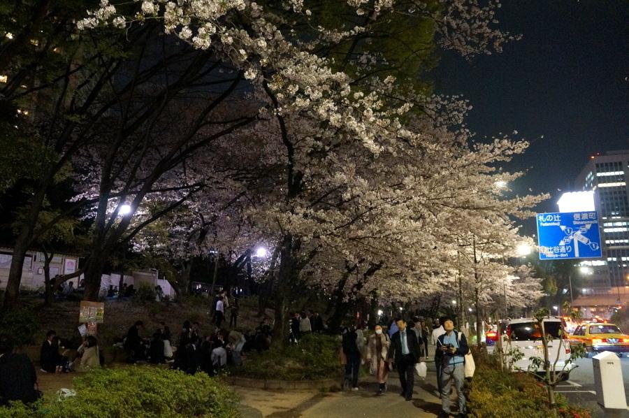 芝公園の夜桜_c0180686_09512309.jpg