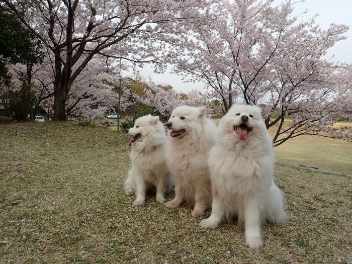 花見散歩♪_a0049296_19224798.jpg