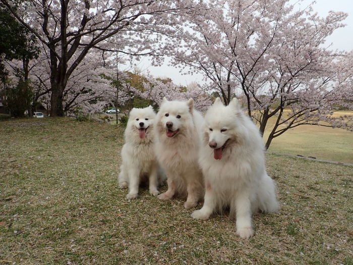 花見散歩♪_a0049296_19230788.jpg