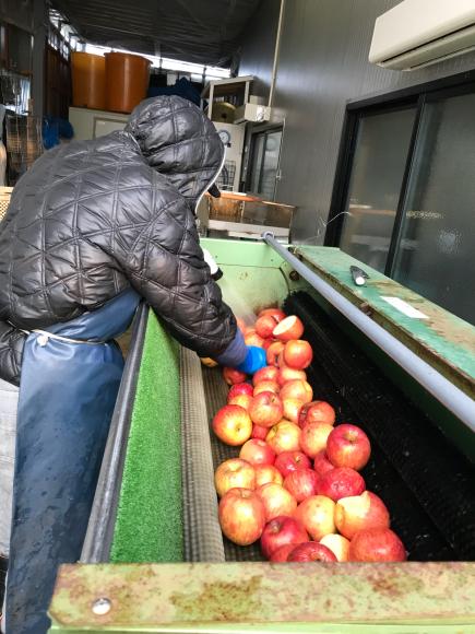今シーズン最後のリンゴジュース加工の様子です。_d0099708_06512084.jpg