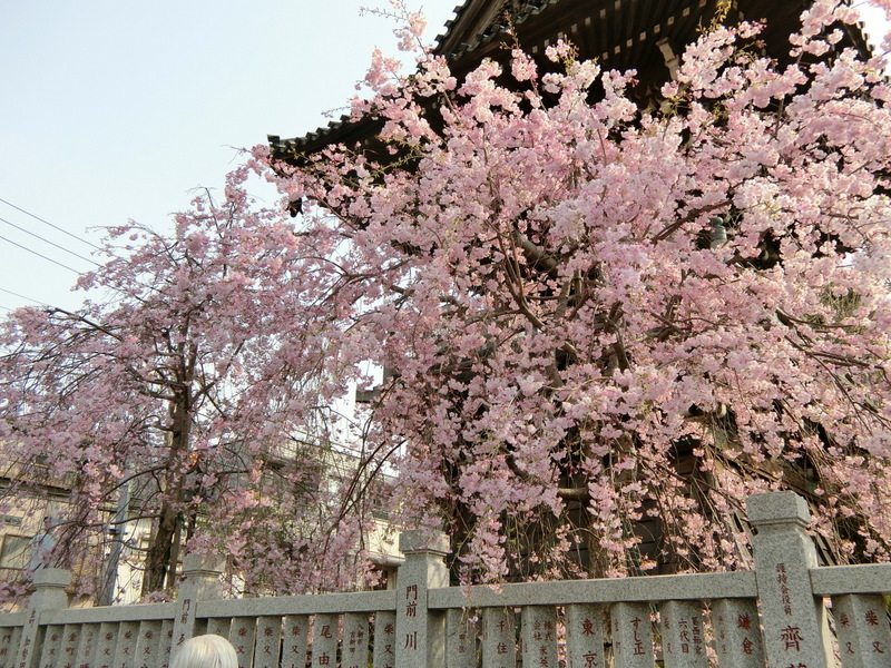 4月2日(月)柴又大好き!_d0278912_23344938.jpg