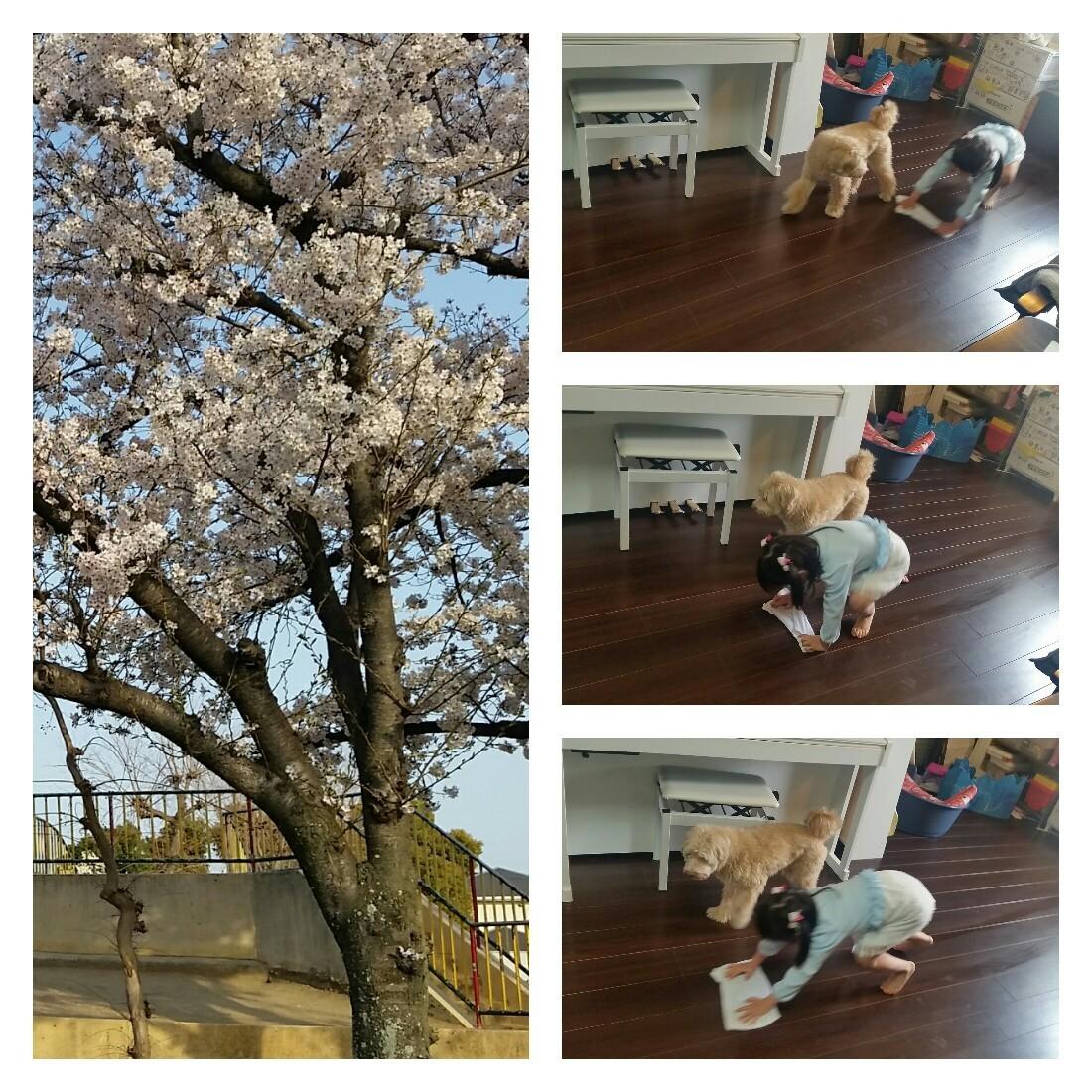 花見とそうじ_e0136815_08170359.jpg