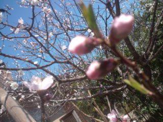 花  いいね_a0142317_15263238.jpg