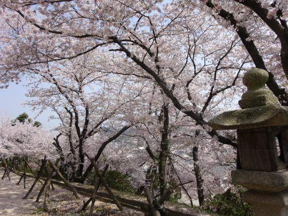 桜_b0163121_21291910.jpeg