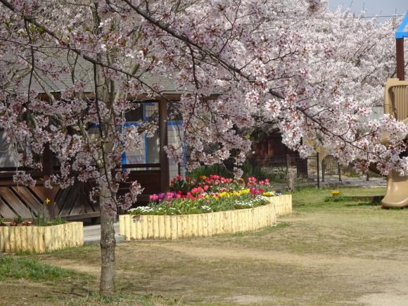 桜_b0163121_21302276.jpeg