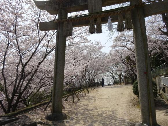桜_b0163121_21305317.jpeg