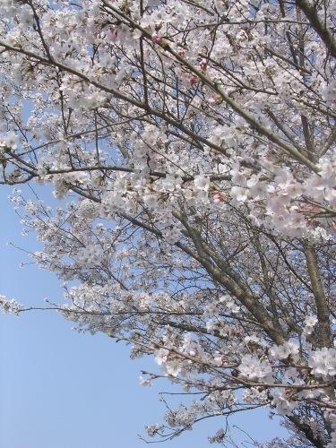 Spring has come!_e0295926_10135301.jpg
