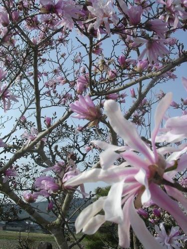 Spring has come!_e0295926_10140464.jpg
