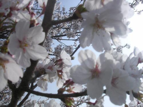 Spring has come!_e0295926_10142113.jpg