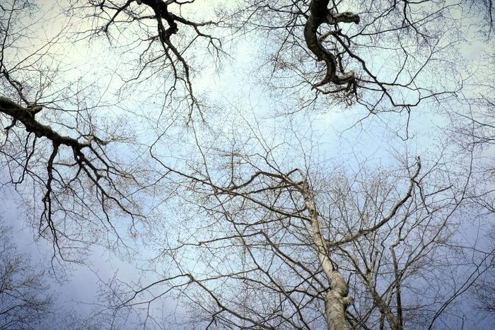 「雪の上を歩くって楽しい。美人林でスノーシュー!」_a0000029_22392546.jpg